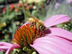 8:16:14 hd honeybee 1 sig