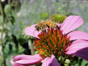 8:16:14 hd honeybee sig