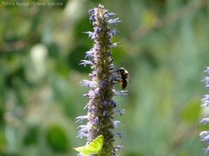 8:2:14 native bee 1 sig