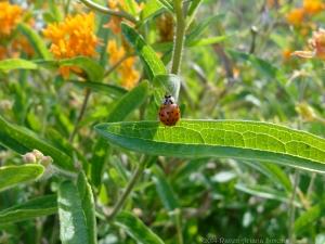 8:25:14 a ladybug sig