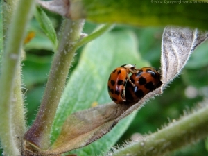 8:25:14 mating ladybugs sig
