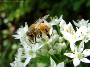8:27:14 honeybee sig