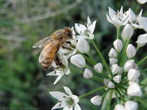8:29:14 honeybee sig
