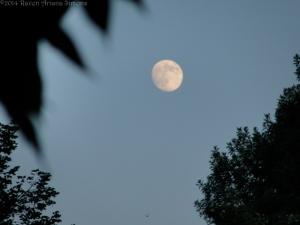 8:8:10 hummy moon sig