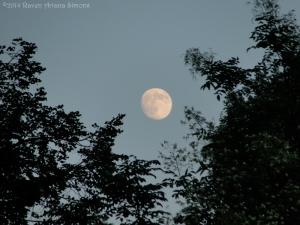 8:8:14 moon sig