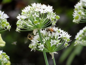 8:6:14 bees chives sig