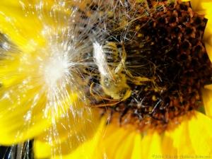 9:1:14 milkweed, bee, sunflower sig