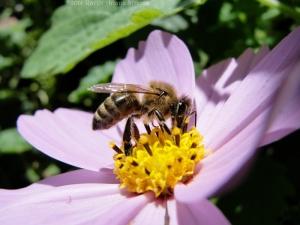 9:12:14 honeybee sig