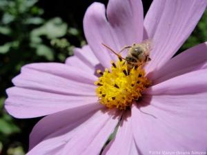 9:12:14 pollen muncher sig