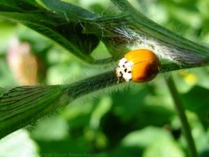 9:13:14 ladybug eyes sig