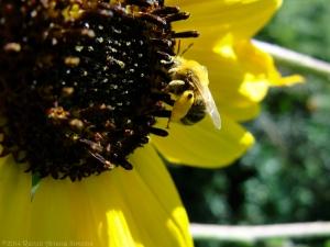 9:13:14 pollen pants sig