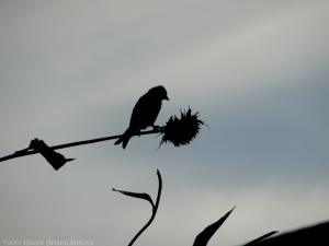 9:14:14 goldfinch silhouette sig