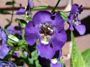 9:15:24 purple flower close sig