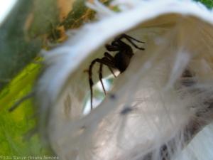 9:16:14 milkweed tube spidey sig