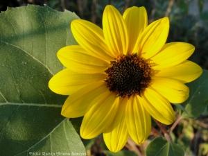 9:17:14 small sunflower sig