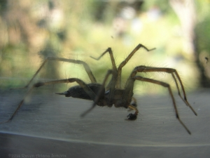 9:18:14 illuminated door spider 1 sig