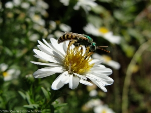 9:19:14 green sweat bee sig