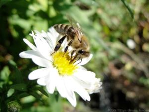 9:20:14 honeybee 1 sig