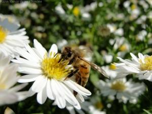 9:20:14 honeybee sig