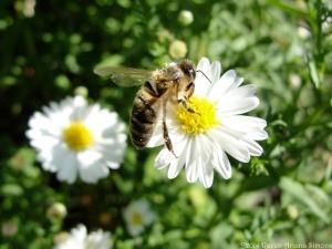 9:20:14 pollen sig