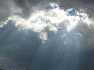 9:22:14 clouds 1 (bees) sig
