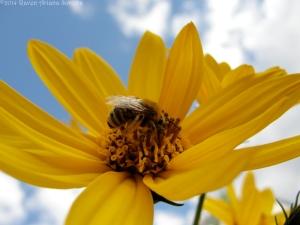 9:22:14 pollen pants sky sig