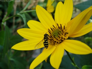 9:26:14 hoverfly 2 sig