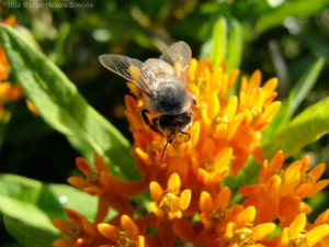 9:3:14 honeybee 1 sig