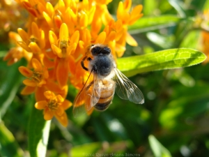 9:3:14 honeybee 2 sig