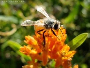 9:3:14 honeybee 5 sig