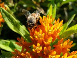 9:3:14 honeybee sig