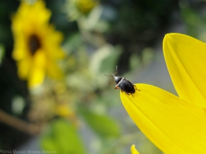 9:4:14 tiny beetle back sig