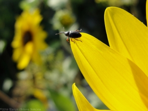 9:4:14 tiny beetle sig
