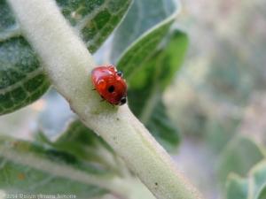 9:8:14 ladybug drop 1 sig