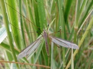 9:9:14 grass crane fly sig