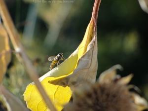 10:10:14 flower fly leaf sig