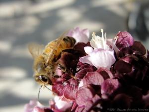 10:11:14 basil flower bee sig