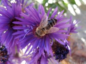 10:11:14 dark bee sig