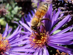 10:11:14 head stand hb purple asters sig