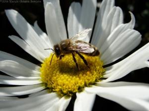 10:1:14 daisy bee 2 sig