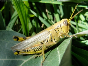 10:13:14 grasshopper close 1 sig