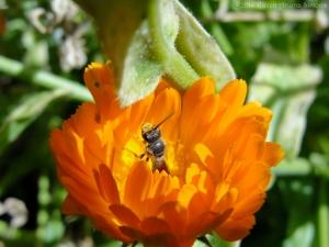 10:14:14 pollen face sig
