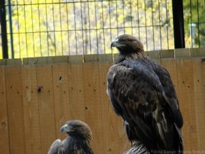 10:16:14 eagles 1 sig