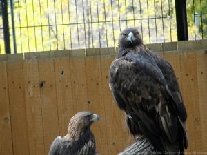 10:16:14 eagles sig