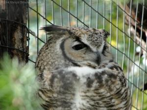 10:16:14 horned owl sig