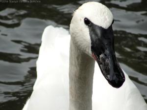 10:16:14 swan sig