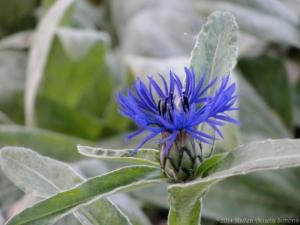 10:17:14 blue flower sig