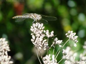 10:20:14 dragonfly 1 sig