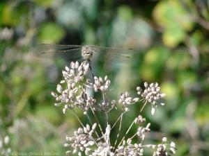 10:20:14 dragonfly sig