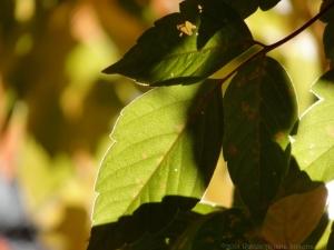 10:21:14 green leaf sig